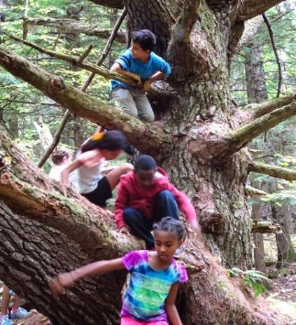 kids_tree_climb